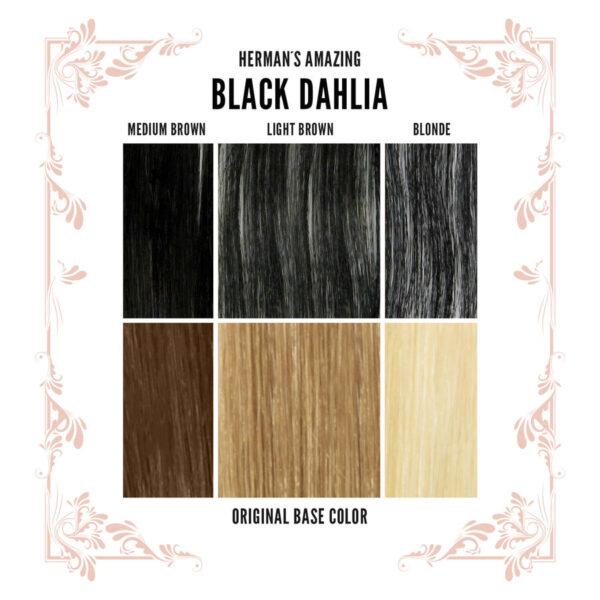 Black Dahlia Colour Chart